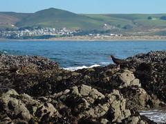 IMG_6216 (Lyrinda) Tags: california photo kayak marin paddle marincounty pointreyes tomalespoint tomalesbay pointreyesnationalseashore prns petalumapaddlers pptreyes nmickscove