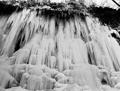 ghosts swimming upstream (lenoredoll) Tags: winter ice water creek frozen minneapolis falls icicle mn minnihaha