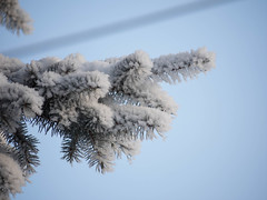 Go South, Young Man (howardpa58) Tags: winter snow tree ice branches alberta reddeer paulhowardphotography
