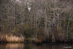 LANDSCAPE (t.rex7000) Tags: landscape sara alabama bayou swamp mobiletensawdelta trex7000