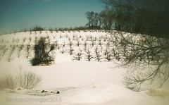 The Orchard (Ben Kuropat) Tags: winter snow ice interesting nikon newengland orchard bishops d610 imben2images