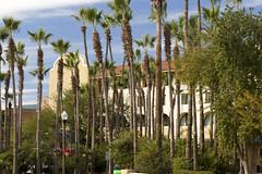 Tempe_Mission_Palms_AV_4580 (David Duane Photography) Tags: palms hotel palm palmtrees tempe palmtreeforest