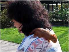 Baby squirrel adopted by attendant at Vincennes Parc Floral (alcowp) Tags: red woman france squirrel shoulder canong3 fra parcfloraldeparis vncennes