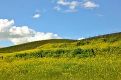 IMG_0275 (Undre_R) Tags: clouds spring vineyards livermore rollinghills springtime livermoreca mustardflowers
