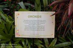 Mexican Ochids