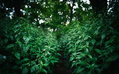 g r e e n (_gate_) Tags: vienna austria wien sterreich green grn augarten au garden plants pflanzen europe europa nikon 20mm 18g ed d750 july juli 2016