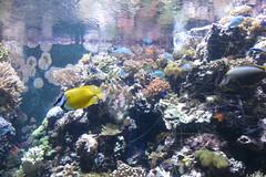 Horniman Museum (lizsmith) Tags: hornimanmuseum museum aquarium london