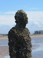 DSCF0698 (SierPinskiA) Tags: sea shells beach liverpool sand ironman pools barnacles ironwork mayday seashore merseyside anthonygormley irishsea 2016 anotherplace crosbybeach blundellsands fujixs1