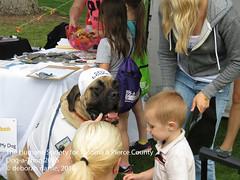 DAT2016_Event_BestKiss_1082 (greytoes_99) Tags: agility cat dat2015 dat2016 event humanesocietytacoma people summer tacoma tacomahs volunteers dog humananimalbond lakewood wa us