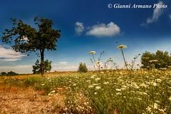 Fiori selvatici (Gianni Armano) Tags: photo italia foto natura campagna piemonte fiori gianni alessandria selvatici piovera armano