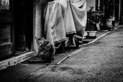 (ogizooo) Tags: canon 5dmark2 sigma24105mmf4dgoshsm straycat cat streetphotography blackandwhite monochrome japan