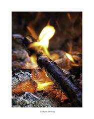 Ardiente (begonafmd) Tags: fuego brasas macro macrophotograpy macrofotografa color rojo bosque forest