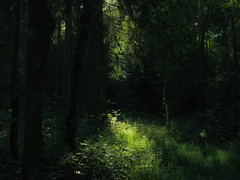 Forest Lights (Netsrak) Tags: wald forst forest woods tree trees baum bume grn green darkness dunkelheit licht light schatten shadow landscape landschaft