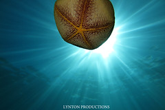 IMG_0129 copy (Aaron Lynton) Tags: lyntonproductions tako honu turtle hawaii maui underwater canon g1x spotted eagle ray octopus sea star