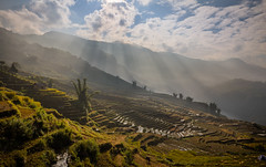 Terrace Fields after harvesting (trai_thang1211) Tags: taybac vietnam