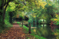 Autumn Reflections (Martyn.Smith.) Tags: trees autumn fall canal waterway reflections stillness fallcolor autumnal wales flickr cymru image photo southwales tree woods leaves canon eos 700d llanover monbreconcanal goetre goytre autumnleaves serene