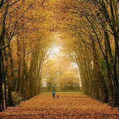 Color of autumn (PhiladelphiaHVAC165) Tags: autumn yellow trees leaves sky landscape red girl sea beauty sunset color water nature flower beach blue sun light clouds tree summer beautiful fall leaf colors green paris france photograph