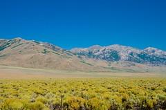 Desert Bloom (hectic skeptic - I've returned!) Tags: osceola nevada ghosttown prosectorsinn elynevada markamorgan twinfalls snakeriver