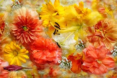 flowers in Ice (Martina Morris ( Ireland) Thanks for over1,000,000) Tags: art flowerscloseup flower macro myimpressionsofnature