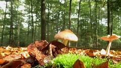 Weerfoto maandag 26 september (Omroep Brabant) Tags: weer weerfoto herfst paddestoel paddenstoel brabant omroepbrabant
