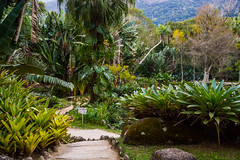DSC_5417 (sergeysemendyaev) Tags: 2016 rio riodejaneiro brazil jardimbotanico botanicgarden     outdoor nature plants    green  beauty nikon