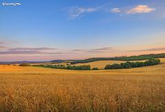 Countryside, Czech Republic.  , . (kotenissimo) Tags: clouds czech field landscape nature plants rural sky sun sunset trees wheat