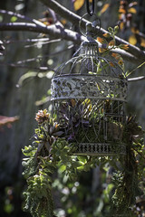 Old bird cage with succulents (julesnene) Tags: juliasumangil julesnene succulent succulents garden california droughttolerant waterwise fanatic