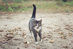 Hello, cat! :) (Laura Marianne) Tags: cat forest leaves autumn october fall bokeh dof canon 50mmf14
