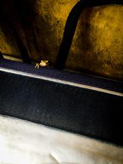 20161021_02 (jam343) Tags: isahaya motono nagasaki frog iphone iphoneography nature カエル 本野 蛙 諫早 長崎 ã«ã¨ã« æ¬é è è««æ© é·å´ è««æ©å¸ é·å´ç æ¥æ¬