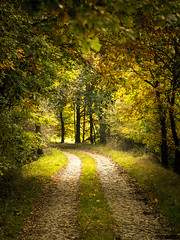 Tunnelblick (marcotuerr) Tags: autumn forest path olympus omd