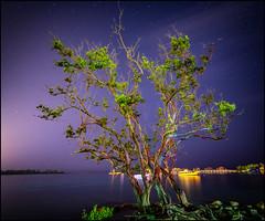 (Robert Bilinski) Tags: tree caribbean sea night shot photography long exposure slow shutter canon samyang 14mmf28 stars starry robbil robert bilinski jamaica montego bay astrophotography
