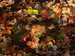 1 with Stream and Leaves (Mertonian) Tags: lunchwalk lookingdown mertonian robertcowlishaw canon powershot g7x mark ii canonpowershotg7xmarkii red yellow orange ineffable awe wonder nature reflection autumn fall beauty beautiful gratitude