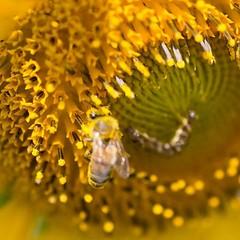 อยากถ่ายผึ้ง แต่ดันหลุดโฟกัสซะงัน