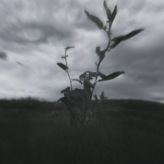 The Bean Stalk (Erin Graboski) Tags: selfportrait art composite fairytale dark photography artist fineart surreal fantasy squareformat mystical conceptual selfportraiture fineartphotography darkart beanstalk conceptualart compositephotography compositeart surrealphotography conceptualphotography selfportraitphotography storytale fantasyphotography fineartportraiture squareformatphotography eringraboski conceptualportraitphotography eringraboskiphotography fineartconceptualphotography