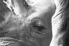 Miradas desde el encierro (fredylp) Tags: tele animales 70300mm pereira canonef70300mm canonef70300 lente70300 zoolgicomatecaa