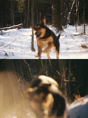 Dog out of focus (PJMoreau94) Tags: trees dog nature forest happy outoffocus lensflare