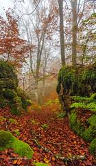 """Rincones del bosque II"" (Pepelahuerta) Tags: paisajes otoo niebla rios hayas navarra bosques urederra urbasa larraona balcondepilatos canon6d singhrayfilters pepelahuerta canon1740ef warmingpolarizersinghray"