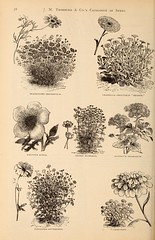 n201_w1150 (BioDivLibrary) Tags: flowers newyork seeds newyorkstate catalogs candytuft brachycomeiberidifolia ageratummexicanum nurserystock adonisaestivalis nurserieshorticulture mertzlibrarythenewyorkbotanicalgarden thorburnjmco bhl:page=45191434 dc:identifier=httpbiodiversitylibraryorgpage45191434 calendulaofficinalismeteor bartoniaaurea calliopsisdrummondii bhlgardenstories bhlinbloom