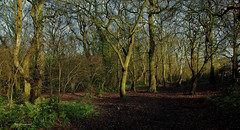 Stanney Woods Nature Reserve (ONETERRY. AKA TERRY KEARNEY) Tags: flowers trees winter england horses urban sun heritage history nature sunshine weather birds skyline canon landscape daylight woods europe flickr december cheshire wildlife culture parks explore chester birkenhead fields kearney wirral merseyside 2014 wirralway ellesmereport backford ellesmereportboatmuseum whitbypark oneterry backfordcheshire terrykearney ellesmereportcheshire december2014 chester2014 croughtoncheshire cheshire2014 stanneywoodsnaturereserve wervincheshire stoakcheshire littlestanneycheshire
