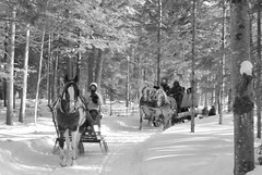 Et vive l'hiver ! (Amiela40) Tags: winter cold forest cheval hiver promenade neige sleigh froid fort sleighride chevaux traneau promenadequestre
