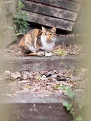 P3076747 (dogman!) Tags: pet animal pen cat olympus neko 猫 ねこ 貓 芝山岩 epl2