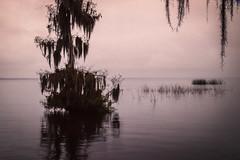 Cypress Dusk (dans eye) Tags: lake canon florida dusk cypress crescentlake