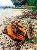 Shipwreck (jaymcbridecom) Tags: life wood green beach weather metal danger island aqua alone cyan australia rope device shipwreck shade unknown environment tough twisted harsh 500px harshweather surivial iphoneography ifttt shadeofcyan toughenvironment