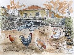 Gallinero (P.Barahona) Tags: gallo gallina acuarelas gallinero rotulador pbarahona