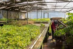 Viveiro-2 (Secom UnB) Tags: plantas jardim prc antonio jardins estufa prefeitura viveiro mudas antnio jardinagem campusdarcyribeiro