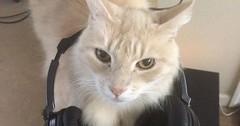 Got a new headphone stand via http://ift.tt/29KELz0 (dozhub) Tags: cat kitty kitten cute funny aww adorable cats