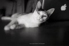 Retrato (Lourdes Ribas Galobardes) Tags: photography fotografia whiteblack blancoynegro retratos cats felinos gatos animales