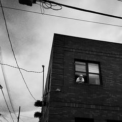 Jeffries (ShelSerkin) Tags: street nyc newyorkcity portrait blackandwhite newyork candid streetphotography squareformat gothamist iphone mobilephotography iphoneography shotoniphone hipstamatic shotoniphone6