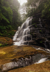 Enchanted Flow (aldog1977) Tags: forrest fog water waterfall waterscape waterfalls nisifilters ferns le longexp nsw rocks nisifilterau nisi