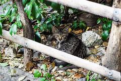 Today's Cat@2016-08-15 (masatsu) Tags: cat catspotting thebiggestgroupwithonlycats pentax mx1